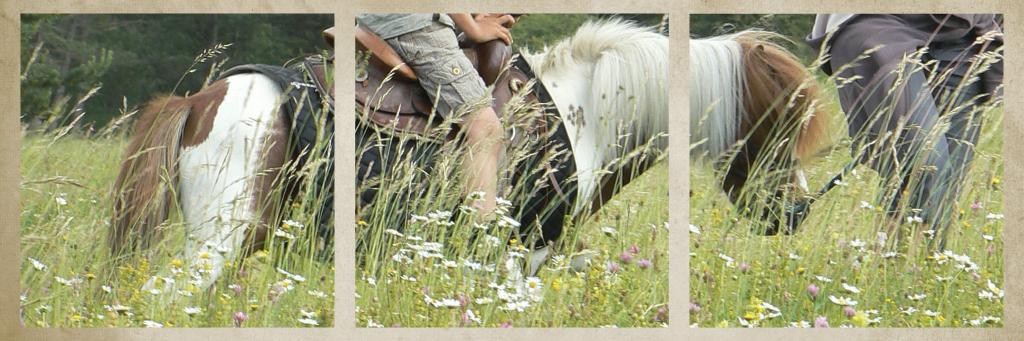 Balade-poney-1